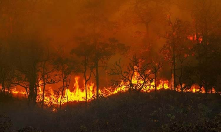 What Is A Brushfire A Guide To Natural Disasters